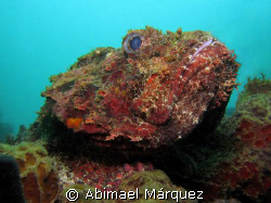 Scorpionfish by Abimael M&#225;rquez 